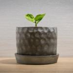 植物がすぐ枯れるのはなぜ?スピリチュアル的な意味とその対処法