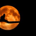 月や太陽が大きく見える時があるのはなぜ?目の錯覚の不思議について