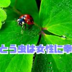 てんとう虫は幸運を運ぶ!体験談から考えるスピリチュアル的な意味